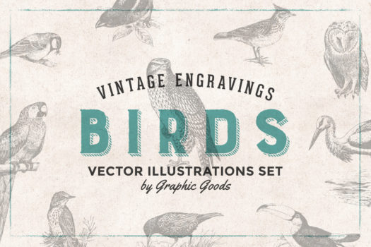 97 Birds - Vintage Engravings Set